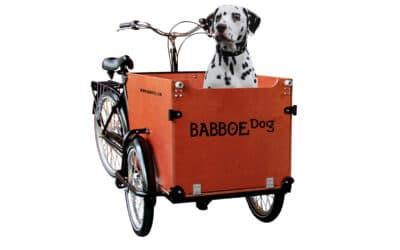 Babboe Dog Lifestyle 1