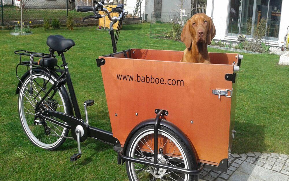 Babboe Dog Lifestyle 3