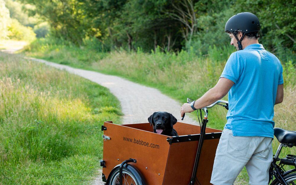 Babboe Dog Lifestyle 5