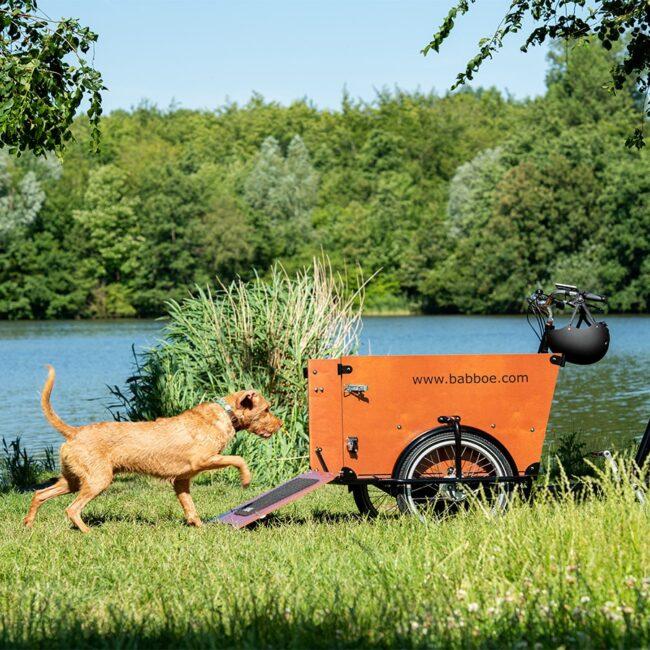 Babboe Dog Lifestyle 6